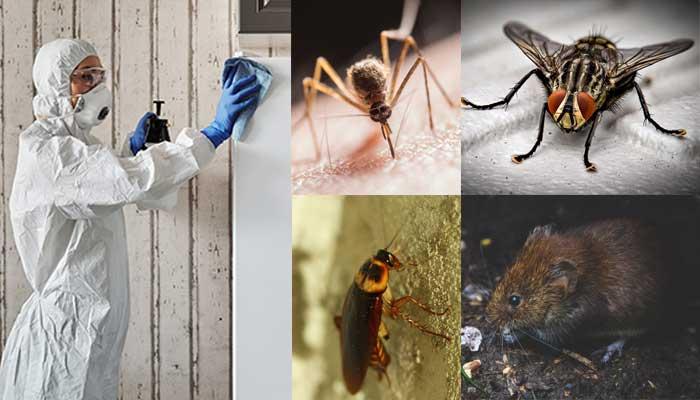 Fumigación y control de plagas en el Quindío