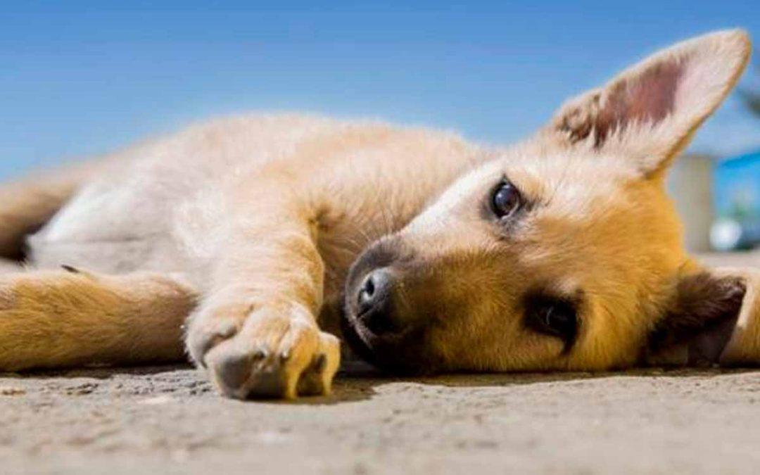 envenenamiento mascotas Circasia