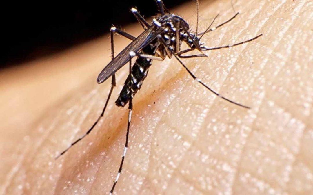 Quindío en alerta por proliferación de dengue