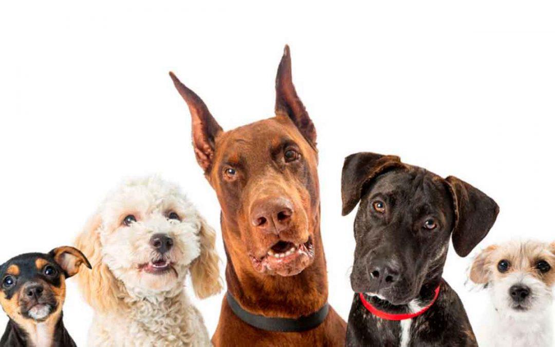 Prohibieron entrada de perros de Colombia a Estados Unidos