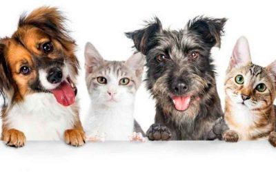 Nuevos requisitos para viajar con mascotas por fuera del país