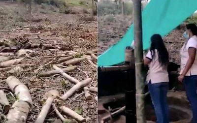 Grave deforestación en Calarcá y Génova y captación ilegal de agua en Montenegro