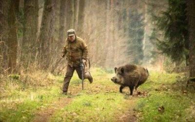 Jabalí mató a cazador de 74 años que le había disparado